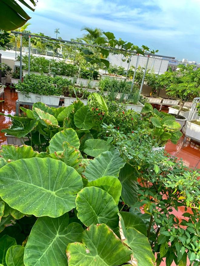 Mẹ đảm Hải Phòng phủ xanh biệt thự bằng vườn rau, trái 120m2 - 5