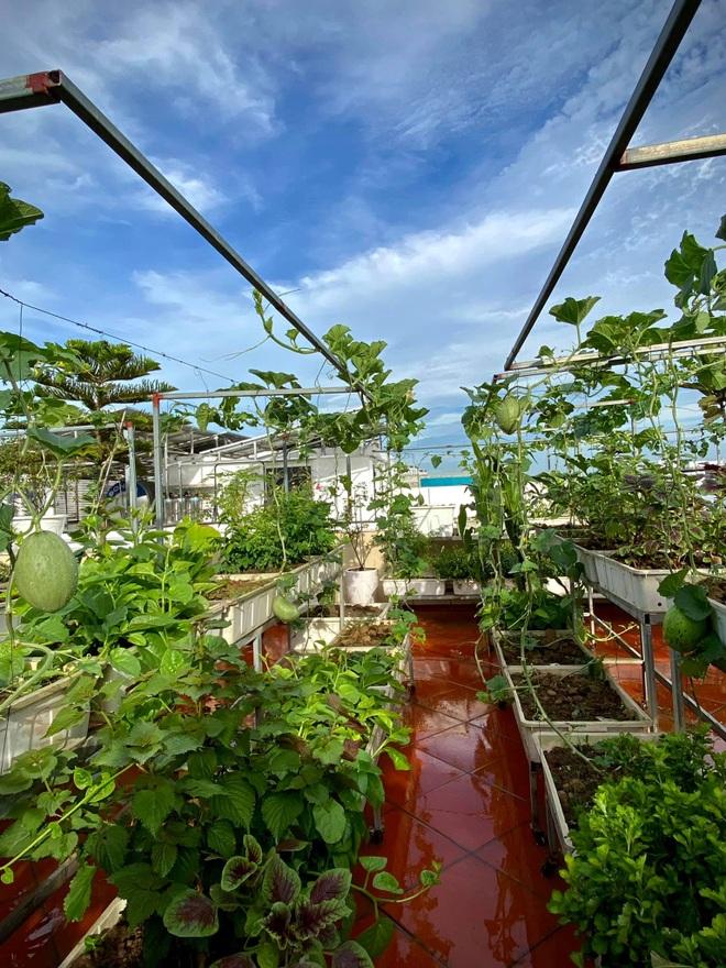 Mẹ đảm Hải Phòng phủ xanh biệt thự bằng vườn rau, trái 120m2 - 7