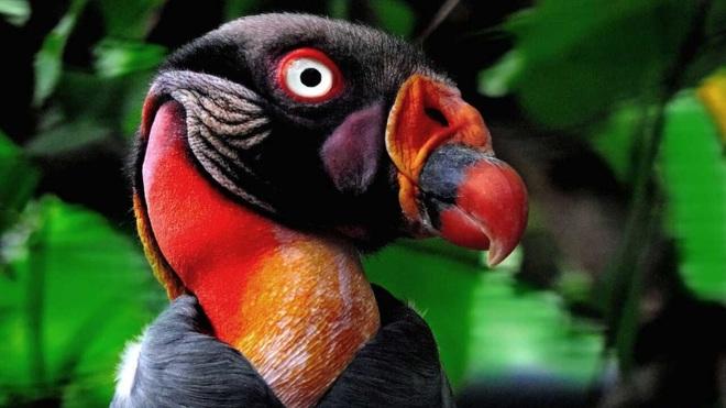 10 loài chim có ngoại hình kỳ quái nhất thế giới - 1