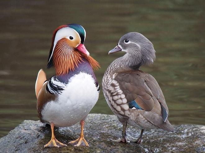 10 loài chim có ngoại hình kỳ quái nhất thế giới - 10