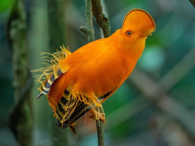 10 loài chim có ngoại hình kỳ quái nhất thế giới - 2
