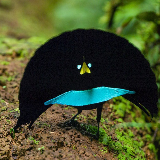 10 loài chim có ngoại hình kỳ quái nhất thế giới - 3