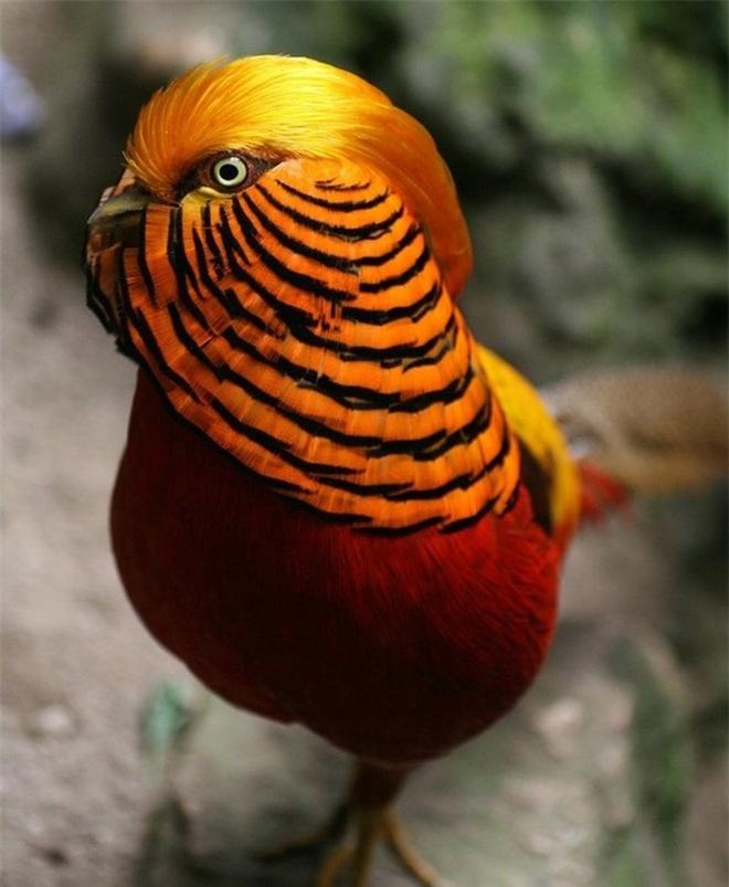 10 loài chim có ngoại hình kỳ quái nhất thế giới - 4