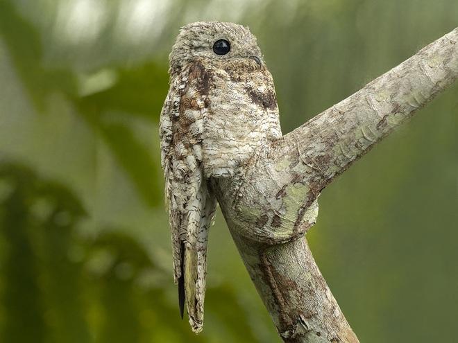 10 loài chim có ngoại hình kỳ quái nhất thế giới - 7