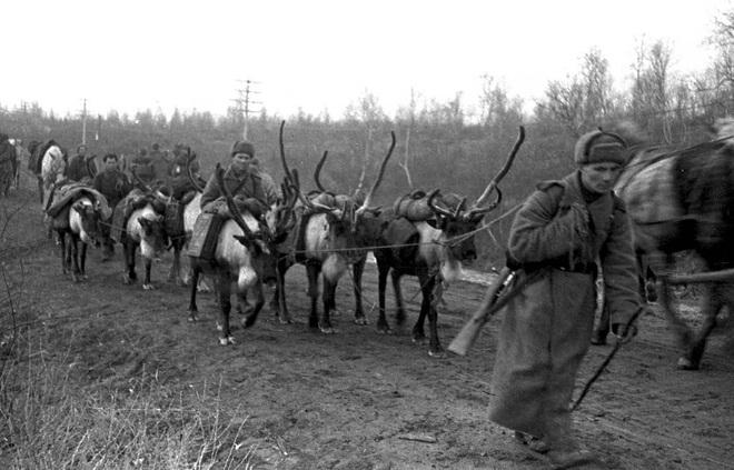 Tiểu đoàn xe tuần lộc: Những người hùng thầm lặng của Hồng quân Liên Xô - 4