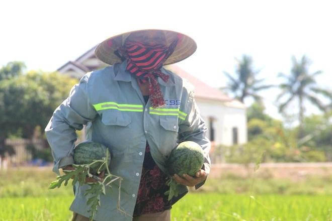 Thu nhập cao hơn cây lúa nhờ trồng dưa trái vụ - 8