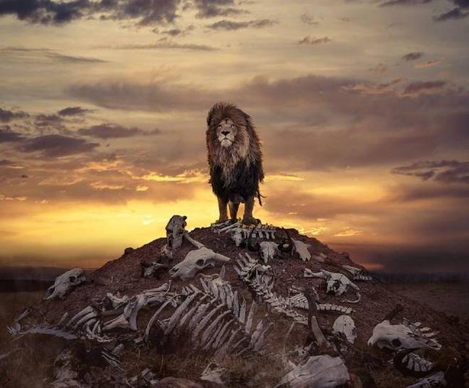 Bức ảnh sư tử kiêu hãnh đứng trên đồi như trong phim Hollywood - 1