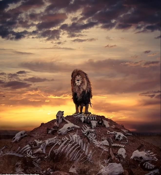 Choáng với bức ảnh sư tử đứng trên... gò xương trắng - 1