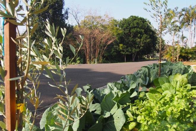 Con đường ngập rau xanh, ai cũng có thể hái miễn phí mang về - 2