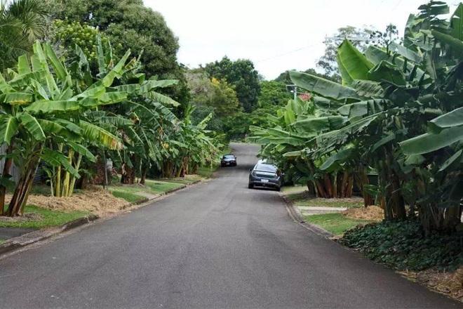 Con đường ngập rau xanh, ai cũng có thể hái miễn phí mang về - 3