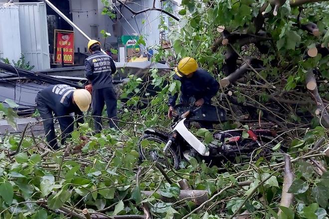 TPHCM: Cây xanh đổ đè người đi đường trong cơn mưa - 2
