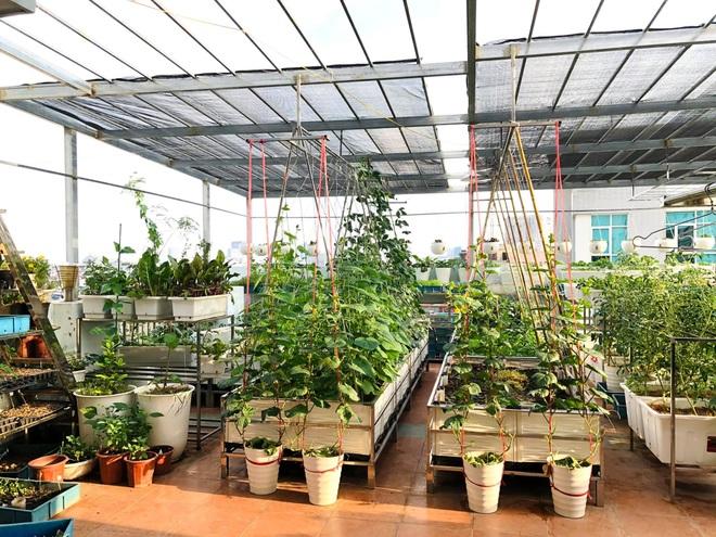 Mẹ đảm ở Hà Nội cặm cụi chở đất, đưa lên tầng 8 làm vườn 100m2 - 1