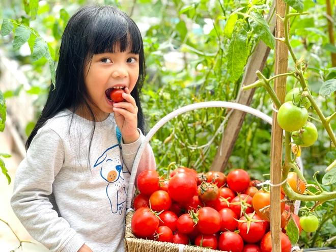 Mẹ đảm ở Hà Nội cặm cụi chở đất, đưa lên tầng 8 làm vườn 100m2 - 9