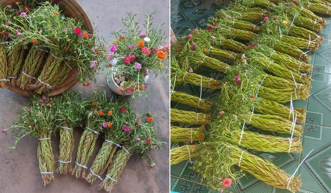 9X khởi nghiệp với hoa mười giờ bonsai, thu hàng chục triệu đồng mỗi tháng - 1