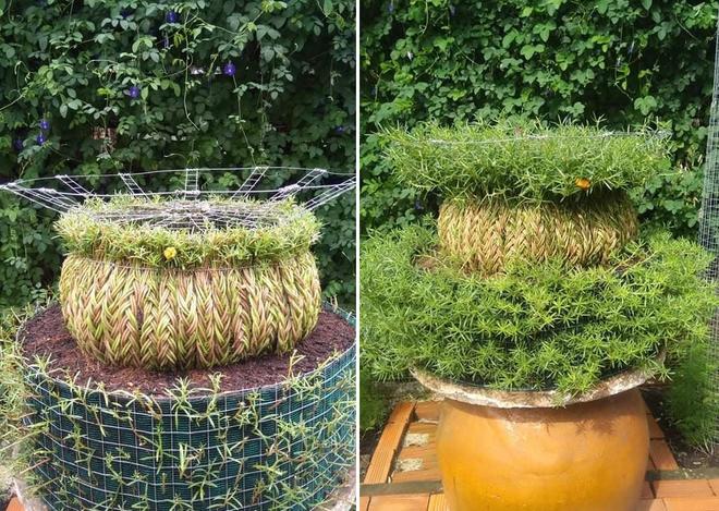 9X khởi nghiệp với hoa mười giờ bonsai, thu hàng chục triệu đồng mỗi tháng - 3
