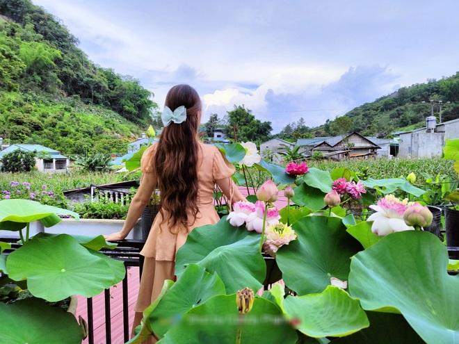 Cô giáo Sơn La làm đầm sen trên cao hơn 30 giống, rực rỡ quanh năm - 10