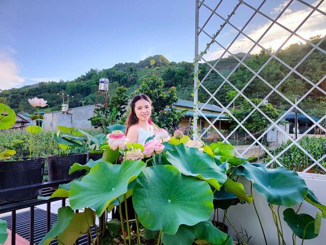 Cô giáo Sơn La làm đầm sen trên cao hơn 30 giống, rực rỡ quanh năm - 13
