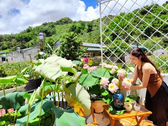 Cô giáo Sơn La làm đầm sen trên cao hơn 30 giống, rực rỡ quanh năm - 14