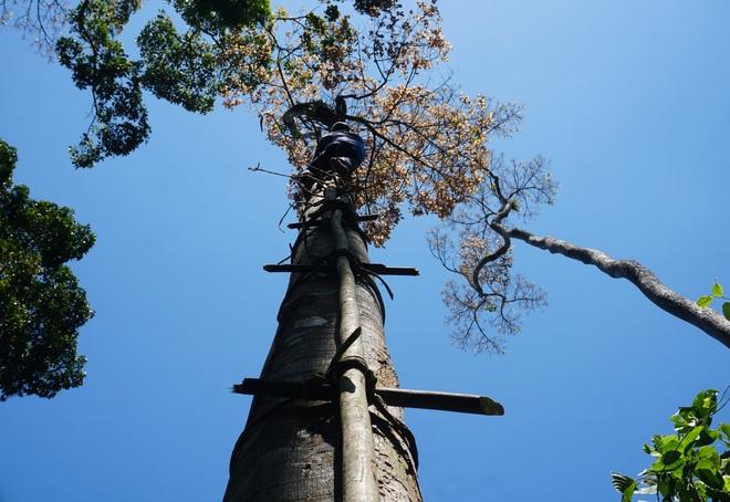Người dân vào rừng săn loại quả 4 năm mới có một lần - 2