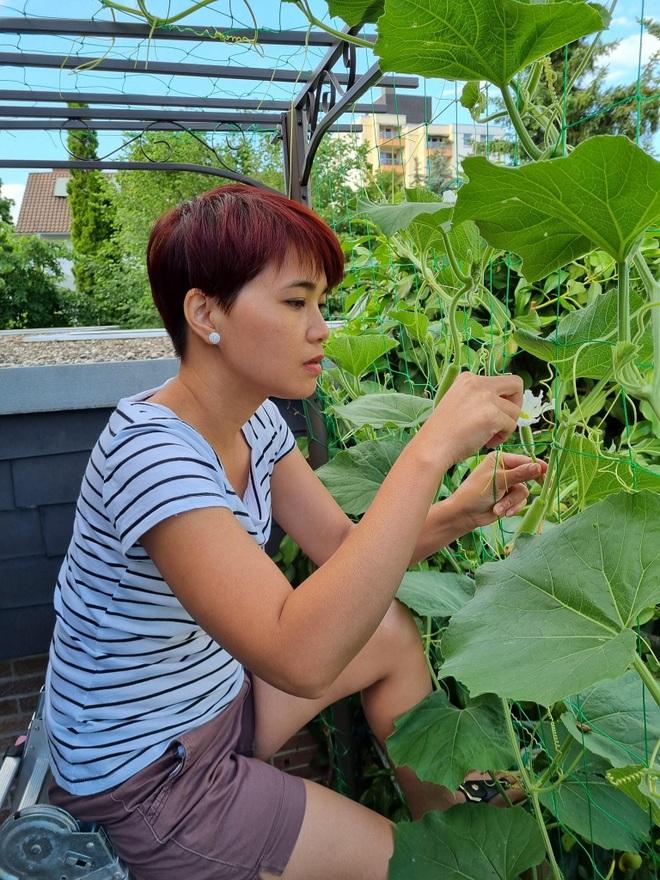Rau siêu thị đắt đỏ, người phụ nữ gốc Việt biến ban công thành vườn ở Đức - 1