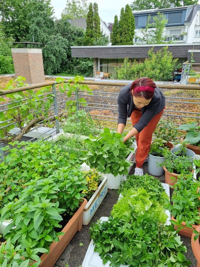 Rau siêu thị đắt đỏ, người phụ nữ gốc Việt biến ban công thành vườn ở Đức - 2