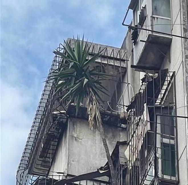 Cư dân hốt hoảng với mối nguy treo trên đầu từ căn hộ bỏ hoang 6 năm - 1