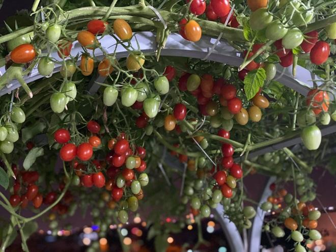 Bí kíp trồng cây dây leo cho quả sai trĩu, ít sâu bệnh của mẹ đảm Đà Nẵng - 2