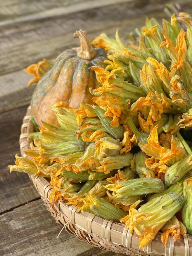 Bất ngờ với những lợi ích tuyệt vời của hoa bí - 2