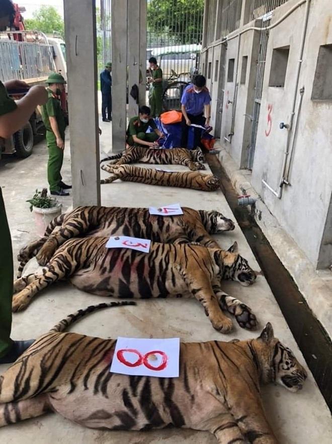 Vụ giải cứu 17 con hổ, 8 con chết: Ai chịu trách nhiệm? - 2