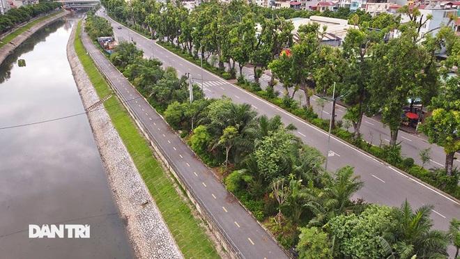 Đánh chuyển hơn 700 cây xanh dọc sông Tô Lịch để làm dự án thoát nước thải - 1