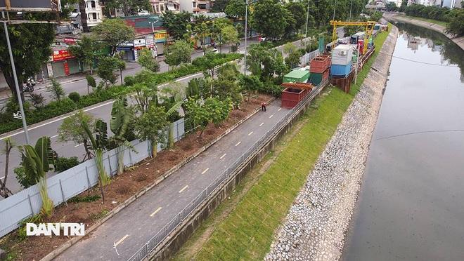 Đánh chuyển hơn 700 cây xanh dọc sông Tô Lịch để làm dự án thoát nước thải - 2