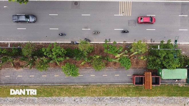 Đánh chuyển hơn 700 cây xanh dọc sông Tô Lịch để làm dự án thoát nước thải - 4