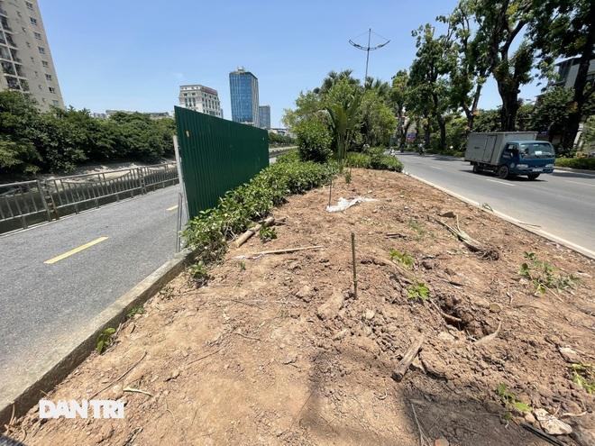 Đánh chuyển hơn 700 cây xanh dọc sông Tô Lịch để làm dự án thoát nước thải - 5
