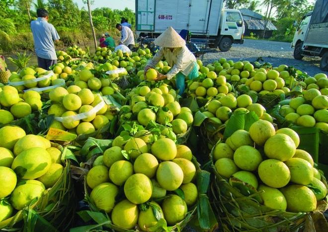 Hàng trăm nghìn tấn rau, cá, lợn, gà của các tỉnh phía Nam cần cứu đầu ra - 1