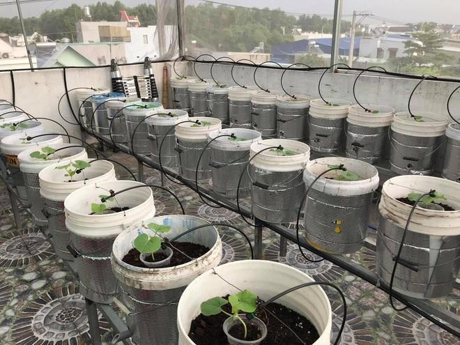 Mê mẩn vườn treo sân thượng, thu 4 tạ quả/ năm của ông bố ở Bình Dương - 7