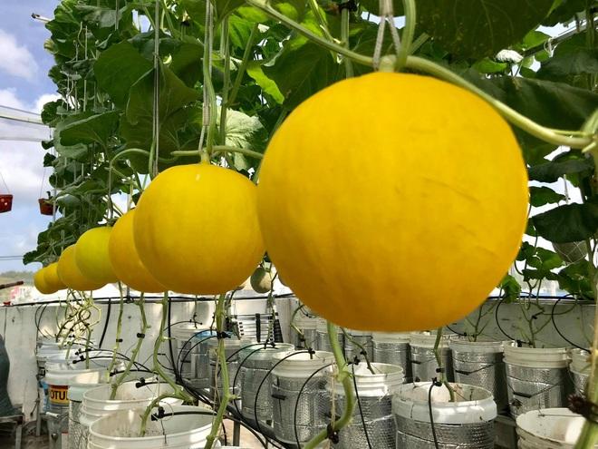 Mê mẩn vườn treo sân thượng, thu 4 tạ quả/ năm của ông bố ở Bình Dương - 12