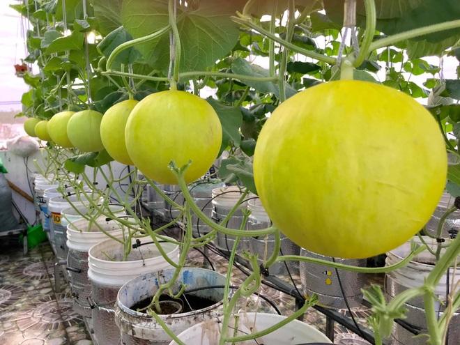 Mê mẩn vườn treo sân thượng, thu 4 tạ quả/ năm của ông bố ở Bình Dương - 6