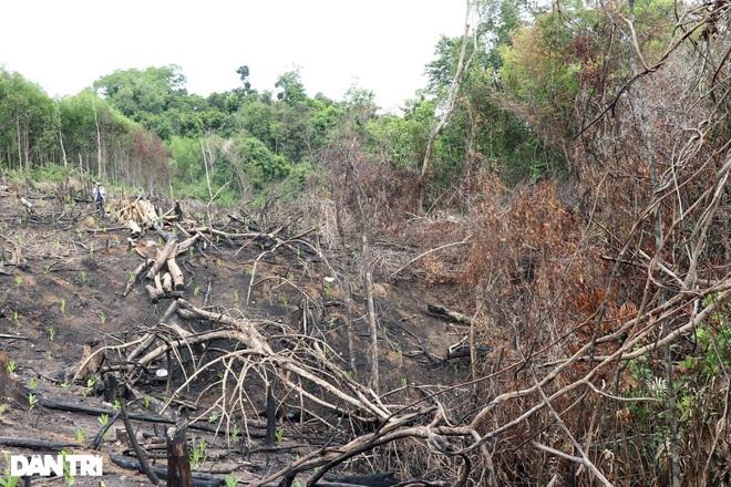 Phát hiện hơn 150 khúc gỗ bất hợp pháp trong nhà nhân viên quản lý rừng - 2