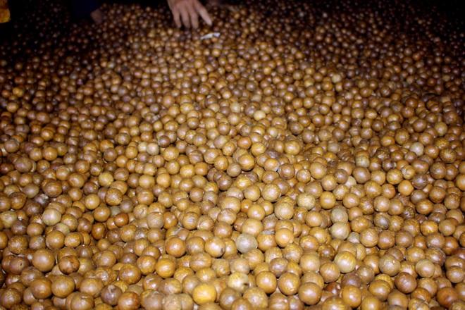 Nông dân vùng cao nguyên giàu lên nhờ trồng cây 3 sao - 2