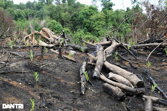 Phá hơn 50.000 m2 rừng tự nhiên, 2 đối tượng bị khởi tố - 4