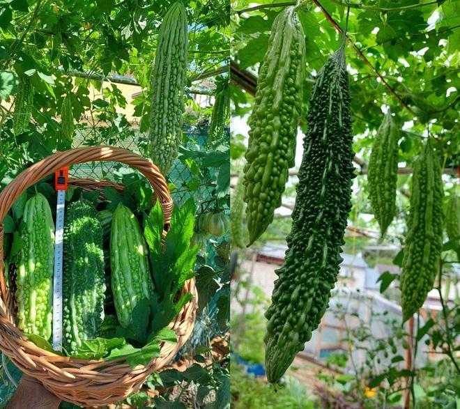 Cải tạo đất toàn sỏi đá, ông bố gốc Việt có vườn toàn trái khủng ở Séc - 9