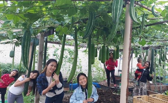 Cải tạo đất toàn sỏi đá, ông bố gốc Việt có vườn toàn trái khủng ở Séc - 12