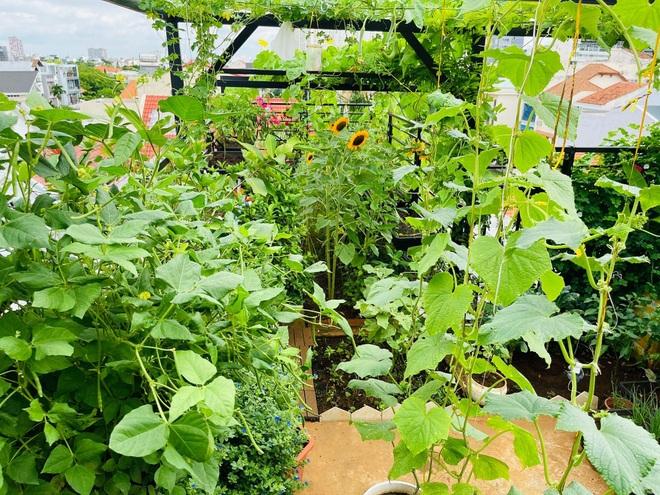 Ngắm vườn như rừng bách thảo trên sân thượng của nữ gia chủ ở Sài Gòn - 2
