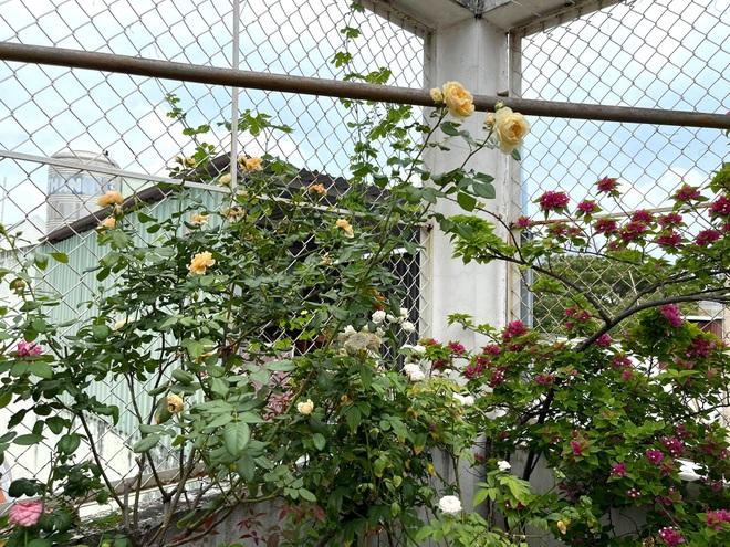Ngắm vườn như rừng bách thảo trên sân thượng của nữ gia chủ ở Sài Gòn - 14