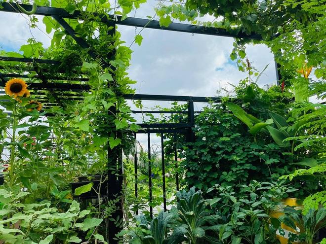 Ngắm vườn như rừng bách thảo trên sân thượng của nữ gia chủ ở Sài Gòn - 1