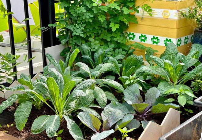 Ngắm vườn như rừng bách thảo trên sân thượng của nữ gia chủ ở Sài Gòn - 10