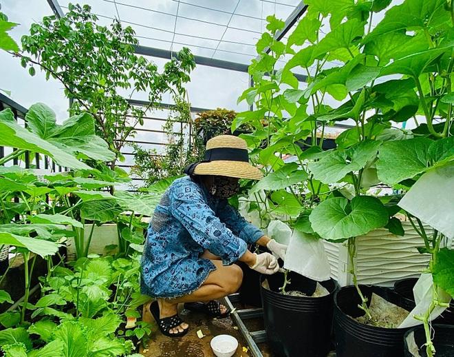 Ngắm vườn như rừng bách thảo trên sân thượng của nữ gia chủ ở Sài Gòn - 11