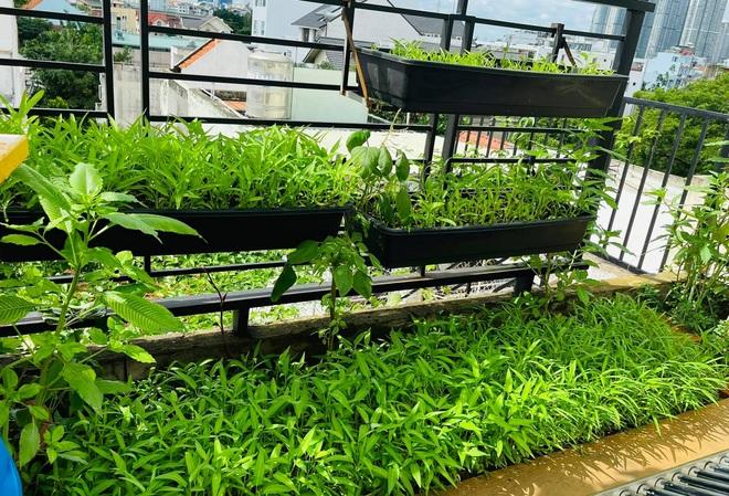 Ngắm vườn như rừng bách thảo trên sân thượng của nữ gia chủ ở Sài Gòn - 4