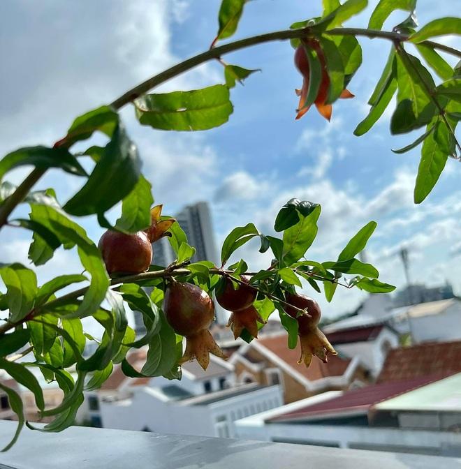 Ngắm vườn như rừng bách thảo trên sân thượng của nữ gia chủ ở Sài Gòn - 5