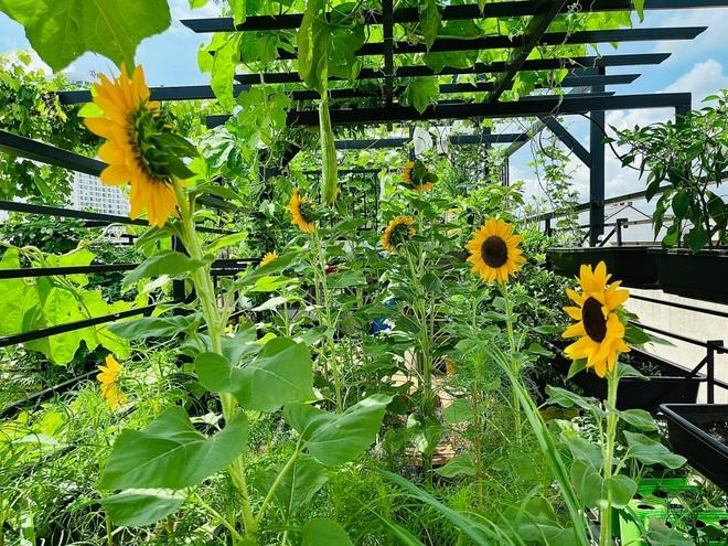Ngắm vườn như rừng bách thảo trên sân thượng của nữ gia chủ ở Sài Gòn - 7